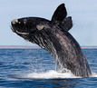 South Africa Tour: WILDLIFE, WHALES AND WINE